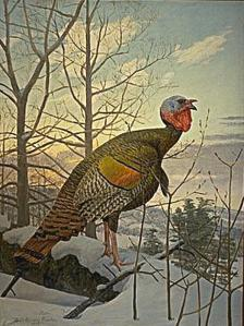Wild Turkey, by Louis Agassiz Fuertes