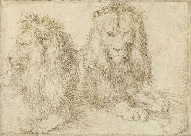 albrecht_durer_-_two_seated_lions_-_google_art_project